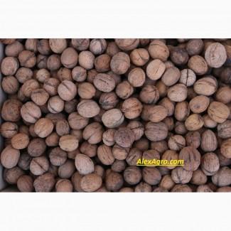 Грецкий орех (Walnut)