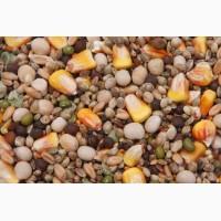 Пшеница, ячмень, соя, рапс, семя подсолнечника, кукуруза - Куплю дорого
