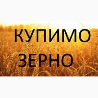 Закуповуємо дорого кукурудзу подрібнену та відходи кукурудзи (крупку)