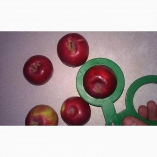 Яблоки виста белла