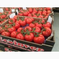 ТОМАТ НА ВЕТКЕ. Испанский производитель. Экспорт свежих овощей и фруктов. Ecoinver Export