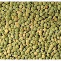 Семена чечевицы зеленой Линза 1 репрод