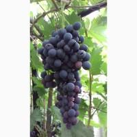 Продам виноград с куста