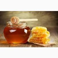 Куплю мед в Тернопільскій та Хмельницькій області