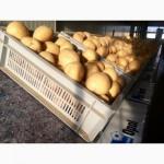 Якість гарантуємо! Продаю Відмінну картоплю / картошка / семенной картофель