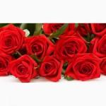 Продам розы оптом