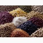 ЗАКУПАЕМ зерновые культуры большими объемами
