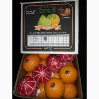 Продаем апельсины Navel (Египет)