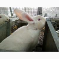 Продаем мясо кролика