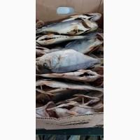 Продам вяленую рыбу в ассортименте. Тарань, Лещ, мелкий лещ, густера, судак, окунь