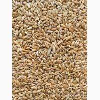 Продам пшеницу-3 класс, 1000т., б/н с НДС, с/х производитель