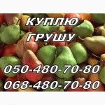 Куплю груши (грушу) оптом с сада деловую и на переработку (на сушку) Харьков Полтава Суммы