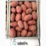 Сертифікована насіннєва картопля по низькій ціні