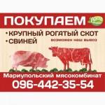 Мариупольский мясокомбинат скупает крупный рогатый скот, свиней
