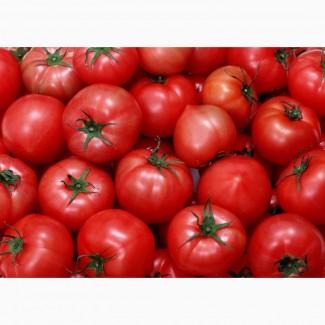 Продаём томаты из Марокко