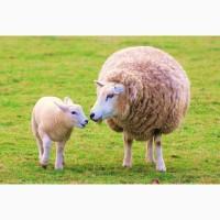 Экструдированные полнорационные корма. комбикорм для КРС, свиней, овець, коз