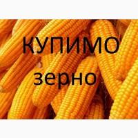 Закуповуємо кукурудзу постійно