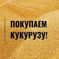 Куплю кукурузу оптом (от 40 т). Высокая цена