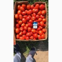 Продам помидор сливка оптом