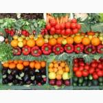 Продам для крупных оптовиков семена овощей и зелени от производителя (цена договорная)