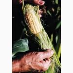 Купимо кукурудзу вологу
