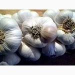 Чеснок озимый продам Семена чеснока