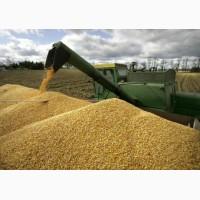 Закуповуємо пшеницю. Вся Україна