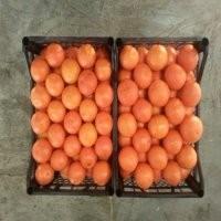 Продажа мандарина оптом на переработку