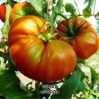 Семена томата Апельсин