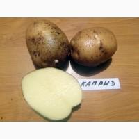 Картофель в ассортименте