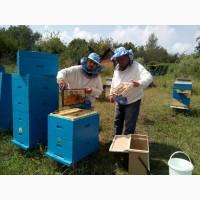 Мед оптом - подсолнечник, разнотравье $2 US за кг. от 500кг