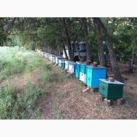 Привозим пчелопакеты под заказ
