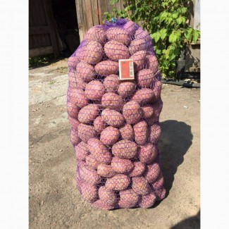 Продам картоплю оптом Белароза