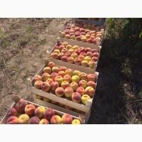 Продам персик с собственных садов