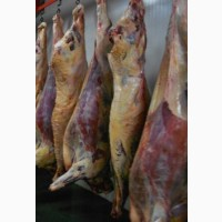 Продажа говядины по частям