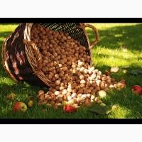 Купим орех грецкий кругляк