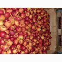 Продам яблка різні сорта великий вибір