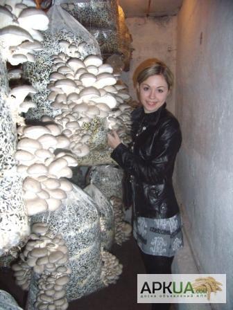 Как хранить грибы вешенки в домашних условиях