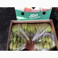 Продажа оптом банана Эквадор