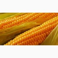 Купим оптом Кукурузу