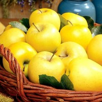 Продаж яблук оптом