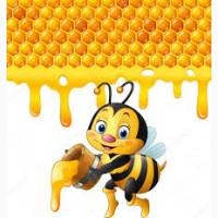 Мед подсолнуха куплю оптом
