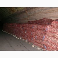 Картофель белых и розовых сортов