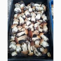 Продаж карпатського білого гриба (свіжий, заморожений, сушений)