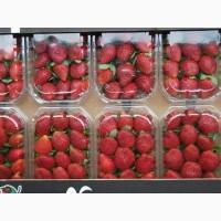 Продам - cвежая клубника - 250 гр