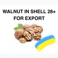 Walnut in shell for export