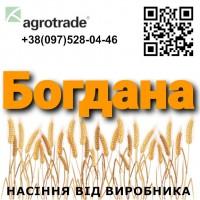 Семена пшеницы Богдана от производителя - Агротрейд О73 ООО 58 8О