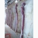 Продам півтуші свинні