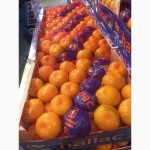 Экзотические фрукты, овощи оптом Турция