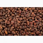 Продам кедровые орехи (оптом)